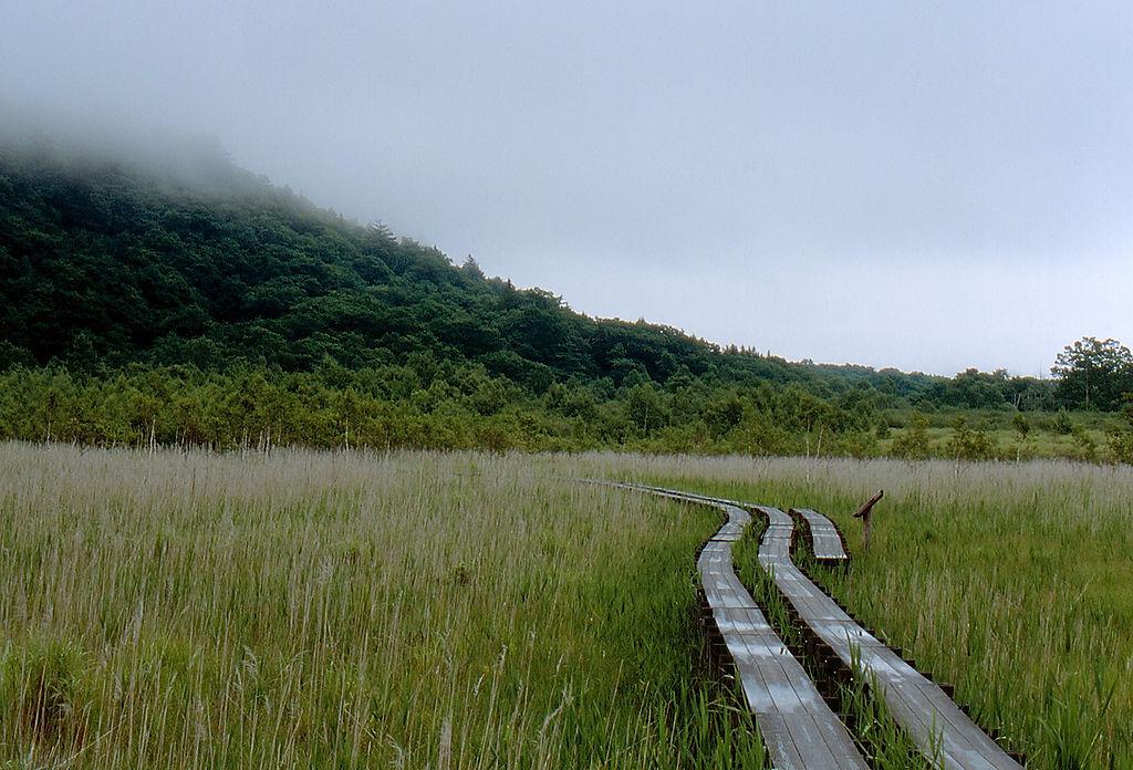 Boardwalk on Senjogahara Plateau