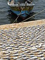 Boat with Drying Fish, Jaffna.jpg