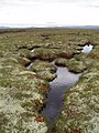 Bog pools on Carn Iain Ruaidh - geograph.org.uk - 1469620.jpg