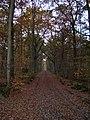 Bois de Plasnes.jpg