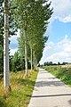 Bomenrij naast Moervaart.jpg