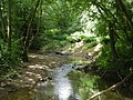 Borle Brook in summer - geograph.org.uk - 872763.jpg