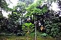 Botanic garden limbe92.jpg