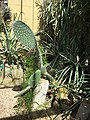 Botanische tuinen Utrecht 50.jpg