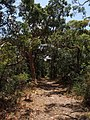 Botany Bay National Park - panoramio (31).jpg