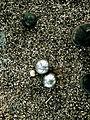 Bouchon et boules Pétanque Angleterre.jpg