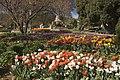 Bowral Tulip Festival - panoramio.jpg
