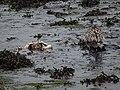 Bretagne July 2020 - 494.jpg