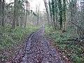 Bridleway in the wood - geograph.org.uk - 1605429.jpg