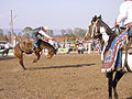 Bronco Riding at Toogoolawah Show.jpg