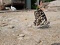 Butterfly20171025 124005.jpg