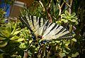 Butterfly 12.jpg