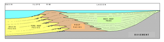 Carbonate platform - Generalized cross-section of a typical carbonate platform.