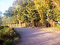 Camino rural en el departamento 9 de Julio, San Juan.jpg