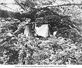 Camp of Lynds Jones and William Leon Dawson, Carroll Island, June 19, 1907 (WASTATE 1383).jpeg