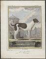 Canis lupus familiaris - 1700-1880 - Print - Iconographia Zoologica - Special Collections University of Amsterdam - UBA01 IZ22300069.tif