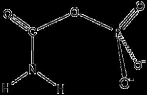 Carbamoyl phosphate synthetase - carbamoyl phosphate