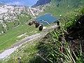 Carex atrofusca.JPG