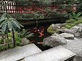 Carps in sacred pond of Suikyo Temman Shrine.JPG