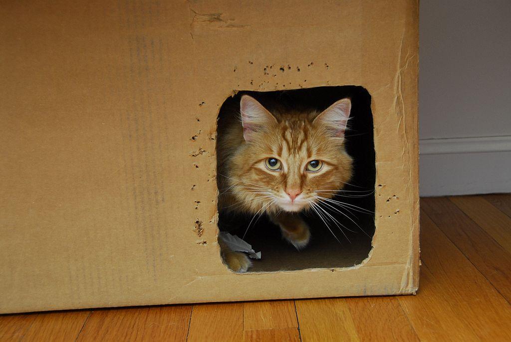 Cat refuge (423926200)