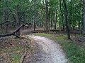Catherine Chevalier Woods Forest Preserve - panoramio (1).jpg