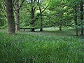 Cawdor Big Wood - geograph.org.uk - 229407.jpg