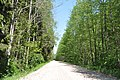 Ceļš, Olaines pagasts, Olaines novads, Latvia - panoramio.jpg