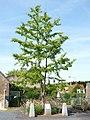 Champoulet-FR-45-arbre mémorial-01.jpg