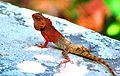 Changeable Lizard.jpg