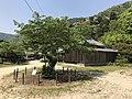 Cherry tree and No Stage of Kikko Shrine.jpg