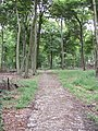 Chiltern Way in Park Wood near Maidensgrove - geograph.org.uk - 886647.jpg