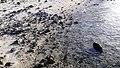 Chorniche, Westbay - panoramio (7).jpg