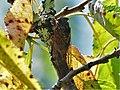 Cigale Périgueux (2).jpg