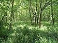 Clapham park woodland - geograph.org.uk - 430853.jpg