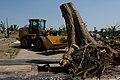 Clearing tree stumps after Joplin tornado (5893456369).jpg