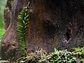 Climbing moss on wood.jpg