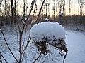 Closeup van plant bedekt met sneeuw - panoramio.jpg