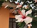 Cochabamba, Bolivia - 16330156565.jpg