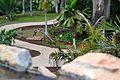 Colección Palmetum de Santa Cruz de Tenerife 06.JPG