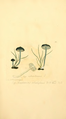 Coloured Figures of English Fungi or Mushrooms - t. 161.png