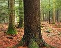 Conifers (8378765450).jpg