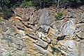 Copper Creek Thrust Fault (Thorn Hill section, northeastern Tennessee, USA) 2.jpg