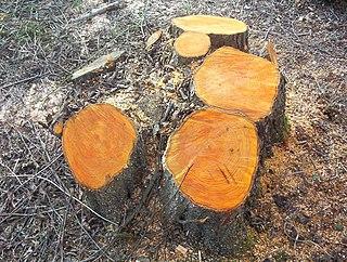 method of tree management