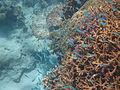 Coral1523.jpg