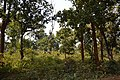 Countryside - Sasapasi - Dhenkanal 2018-01-25 9349.JPG