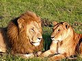 Courting Couple ! (3381728759).jpg