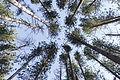Cranesville Swamp Preserve 07.JPG