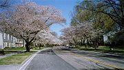 Crofton Parkway spring