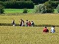 Crop circle near Avebury Manor - geograph.org.uk - 885306.jpg