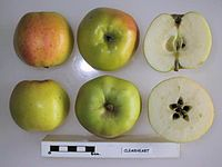 Cross section of Clearheart, National Fruit Collection (acc. 1966-041).jpg